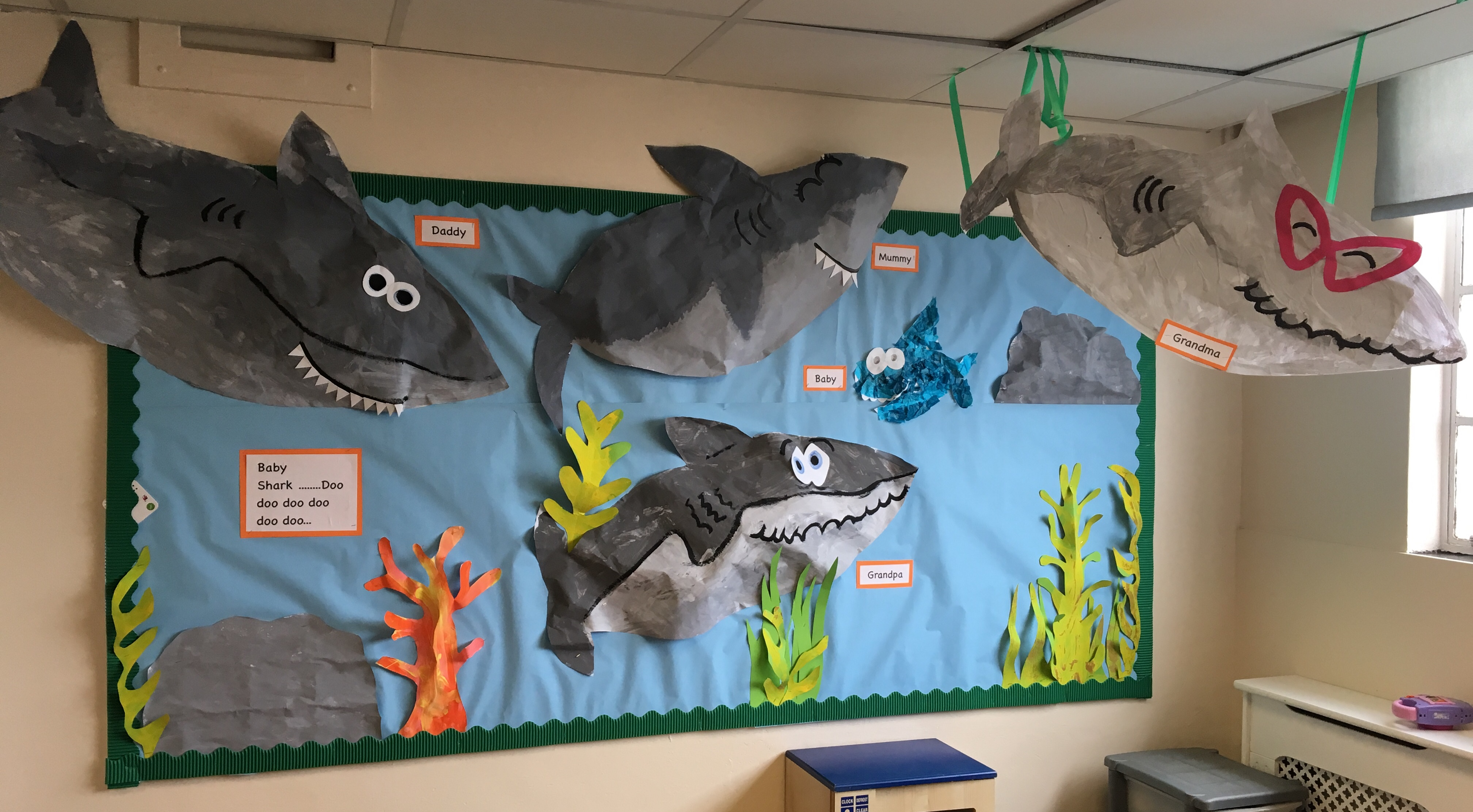 Sharks Display